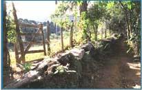 Bosque Mãe D'água